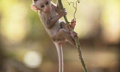 Im Reich der Affen - Bild 11