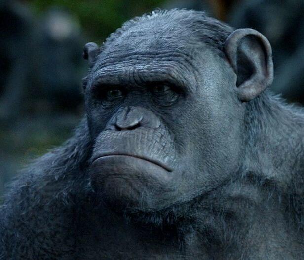 Planet der Affen: Prevolution mit Terry Notary