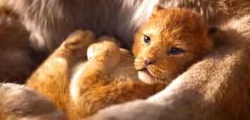Bild zu:  Der König der Löwen