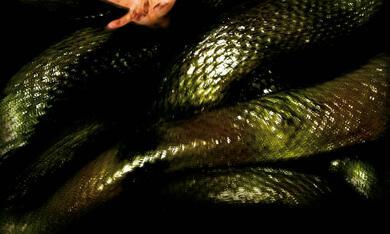 Anacondas: Die Jagd nach der Blut-Orchidee - Bild 2