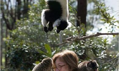 Island of Lemurs: Madagascar - Bild 2
