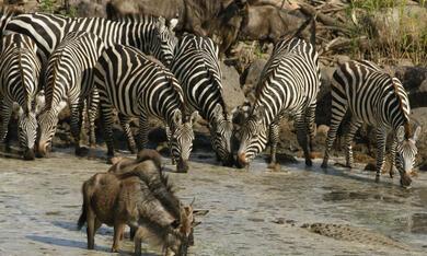Serengeti - Bild 9