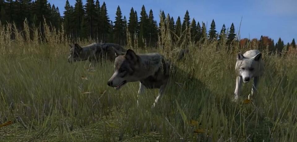 In DayZ treffen wir bald auf allerlei Tiere