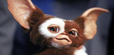 Wäre bestimmt gern wieder dabei: Gizmo aus Gremlins - Kleine Monster