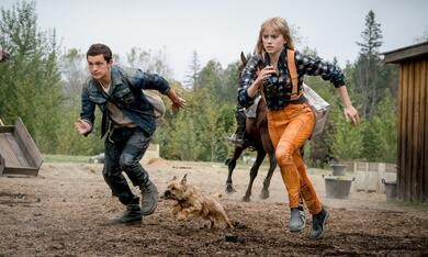 Chaos Walking mit Daisy Ridley und Tom Holland - Bild 6