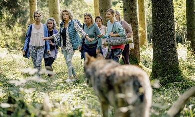 Reiterhof Wildenstein - Jacomo und der Wolf - Bild 10
