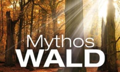 Mythos Wald - Bild 1