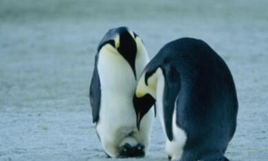 Die Reise der Pinguine - Bild 6