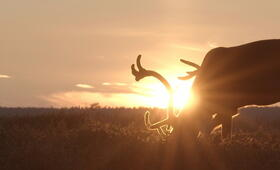 Die Hüter der Tundra - Bild 5
