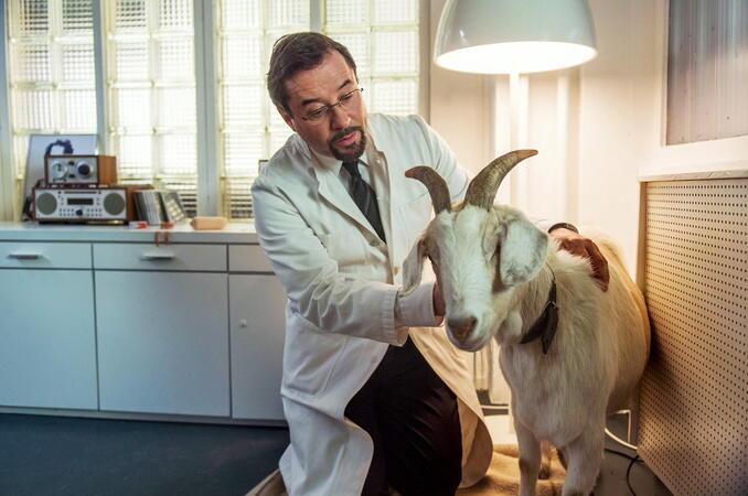 Tatort: Das Wunder von Wolbeck
