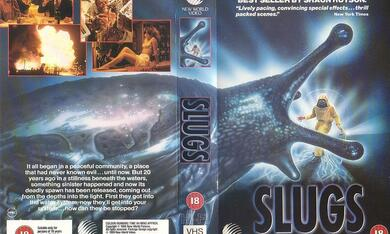 Slugs - Schnecken - Bild 2