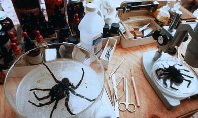Arachnophobia - Bild 2