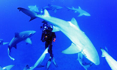 Sharkwater Extinction - Bild 2