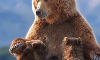 Bären - Bild 12