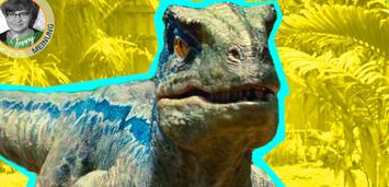 Bild zu:  Blue in Jurassic World