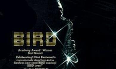 Bird - Bild 10