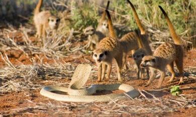 Wächter der Wüste - Bild 6