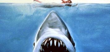 Bild zu:  Der weiße Hai