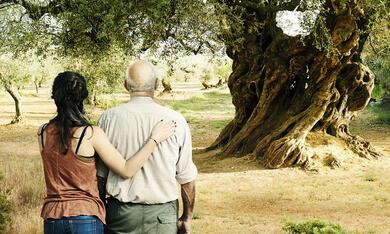 El Olivo - Der Olivenbaum - Bild 1