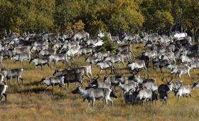 Die Hüter der Tundra - Bild 4