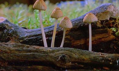 Fantastische Pilze - Die magische Welt zu unseren Füssen  - Bild 5