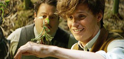Phantastische Tierwesen und wo sie zu finden sind: Newt & Jacob mit Bowtruckle