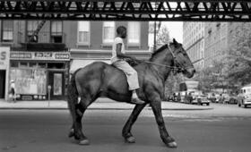 Finding Vivian Maier - Bild 8