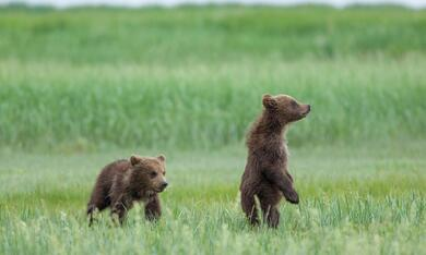 Bären - Bild 11