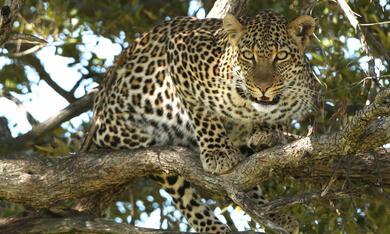 Serengeti - Bild 7