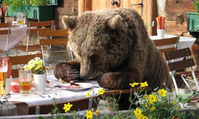 Der Bär ist los! - Bild 3