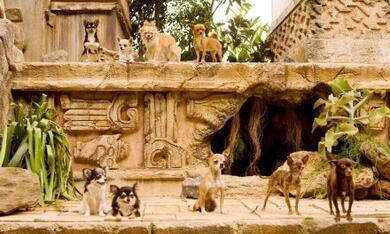 Beverly Hills Chihuahua - Bild 7
