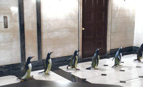 Mr. Poppers Pinguine - Bild 7