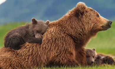 Bären - Bild 3