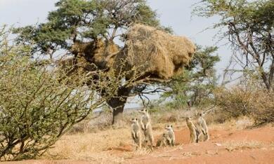 Wächter der Wüste - Bild 3