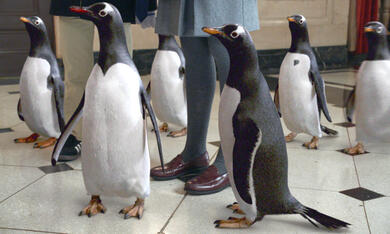 Mr. Poppers Pinguine - Bild 6