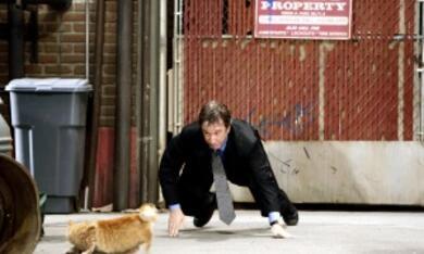 The Shaggy Dog - Hör mal wer da bellt - Bild 2