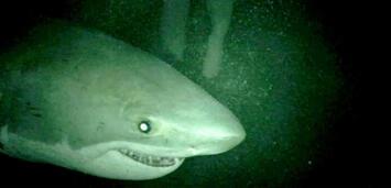 Bild zu:  Hai! Open Water 3: Cage Dive