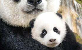 Born in China - Bild 44