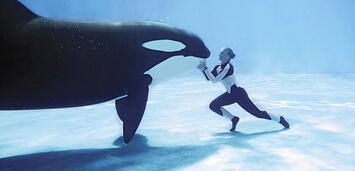 Bild zu:  Ein Orca und seine Trainerin