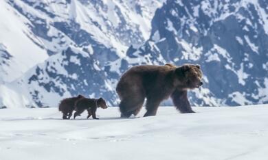 Bären - Bild 10