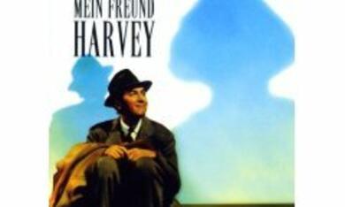 Mein Freund Harvey - Bild 2