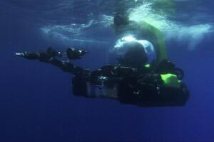 Aliens der Meere - Bild 2 von 12