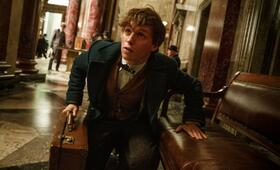 Eddie Redmayne in Fantastic Beasts and Where to Find Them - Bild 57