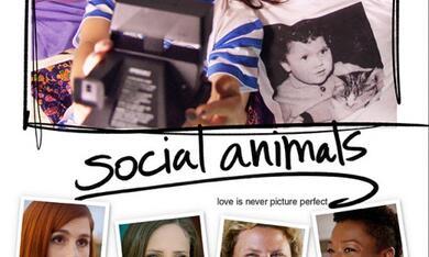 Social Animals - Bild 2