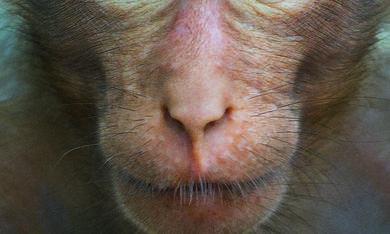Im Reich der Affen - Bild 1