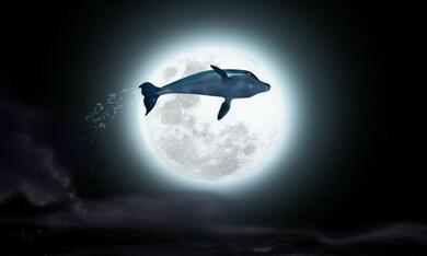 Der Delfin - Die Geschichte eines Träumers - Bild 4