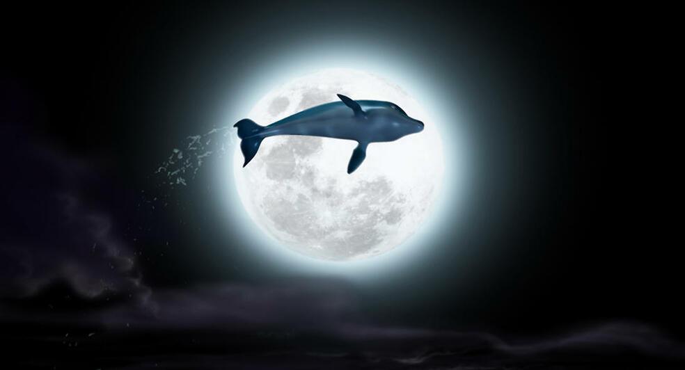 Der Delfin - Die Geschichte eines Träumers