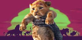 Die Garde Der Löwen Staffel 2 Moviepilotde