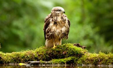 Unser Wald - Das grüne Wunder - Bild 3