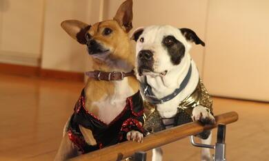 Beverly Hills Chihuahua 3 - Bild 1